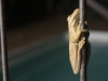 Frog on Pool Fence