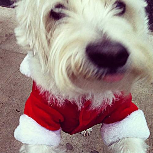 Santa Claus Parade 2013 - Christmas Dog!