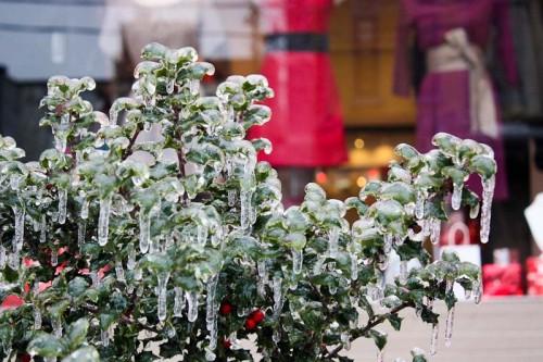 Toronto Ice Storm-10