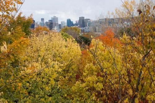 Montreal Fall-15