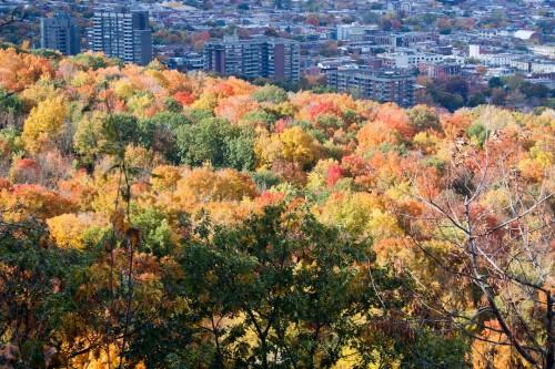 Montreal Fall-9
