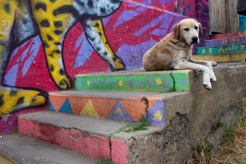 Chile - street dog 2