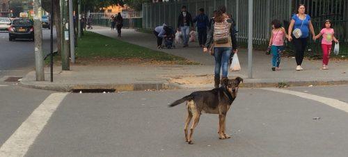 Chile - street dog 5
