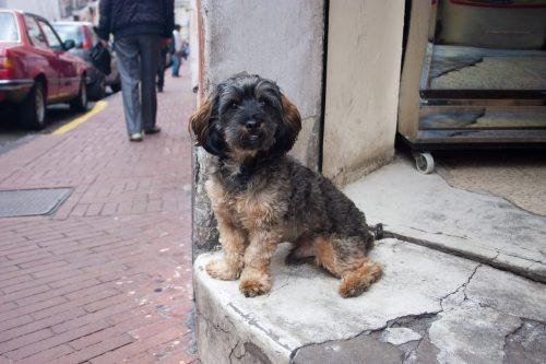Ecuador - street dog