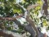 Green Island Tree