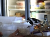 Magpie at Whistle Stop Cafe, Yungaburra