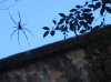 Spider at Little Crystal Creek